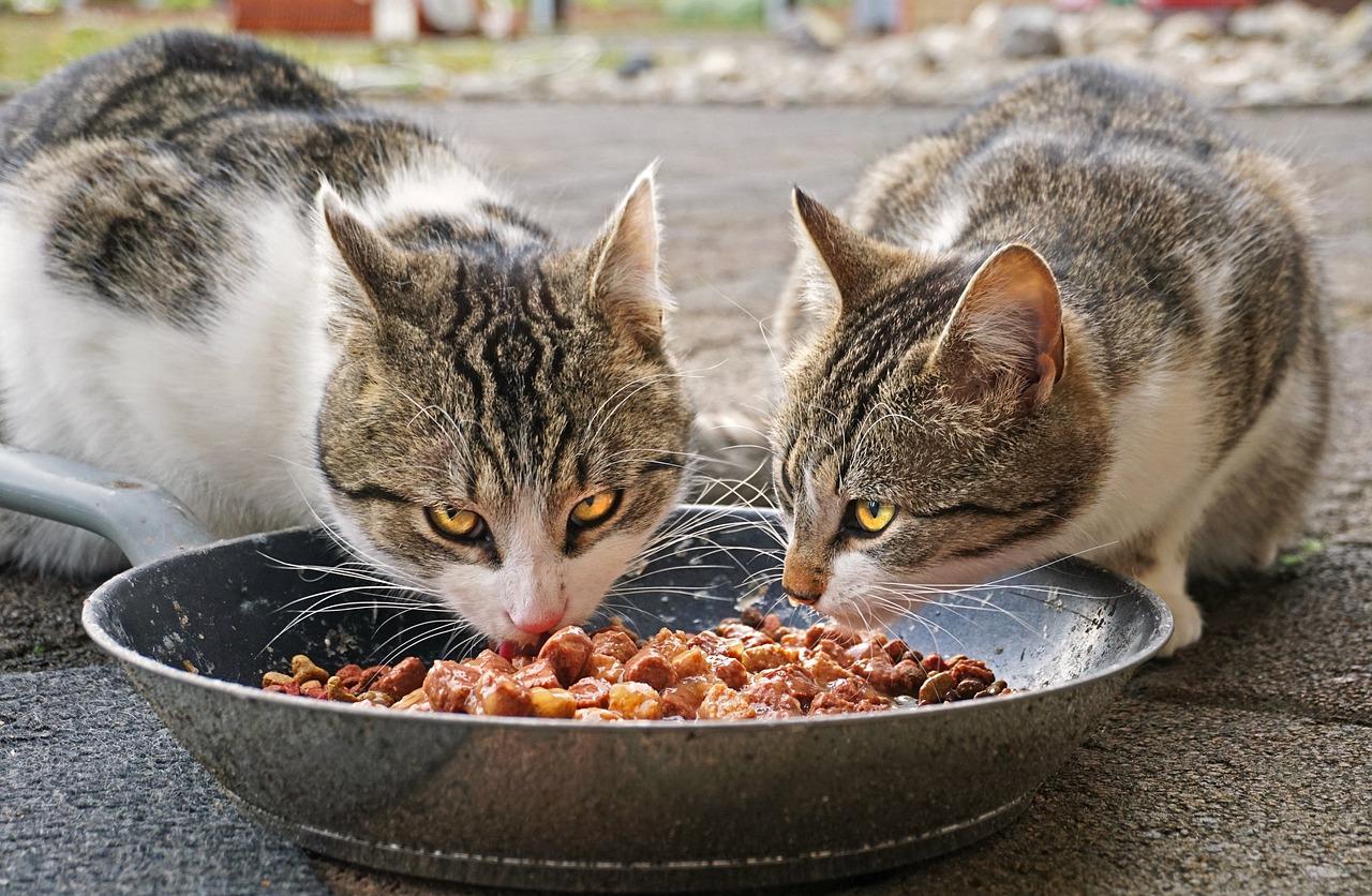 Antyalergiczne karmy dla kotów